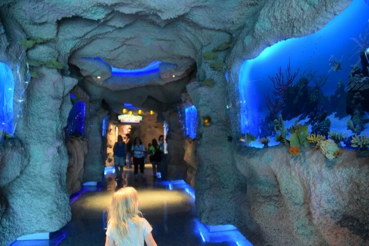 Houston 39 S Downtown Aquarium The Tiptoe Fairy