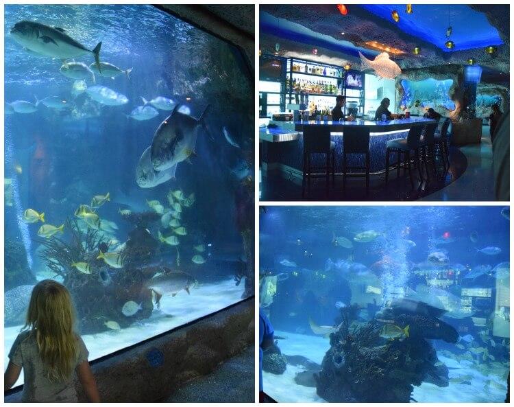 What can you do at Houston's Downtown Aquarium? Come see! #ad #AquariumHouston