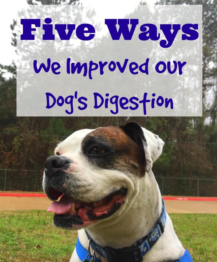 Come see what we're doing to improve our dog, Hank's digestion