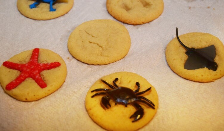 Cookie Fossils for Kids - warm cookies & animals