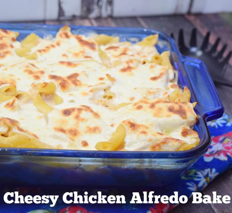 Make this easy Cheesy Chicken Alfredo Casserole for any easy weeknight dinner.