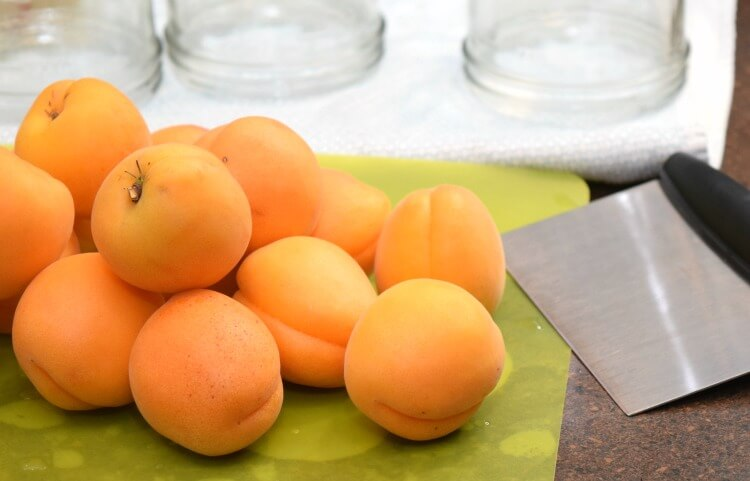 My last crop of apricots with my OXO Good Grips chopper.